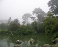 San Francisco Botanical Garden: view of McBean wildfowl pond and Ancient Plant Garden.  San Francisco's unusual mild foggy Mediterranean climate enables the gardens to grow many plants that will not grow anywhere else in North America.