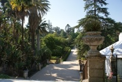 Central Avenue of the Botanic Garden of the University of Coimbra, Portugal